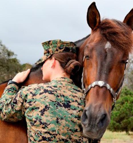 Horse Sponsorship Program