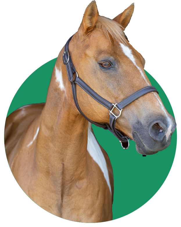 Horse in a green circle